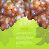 Pink grapes bunch with dew drops. Vector bunch of the fresh pink grapes with the green leaves and the dew droplets on a green background with glow flare, grape Stock Photography