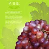 Red grapes bunch with dew drops. Vector bunch of the fresh red grapes with the green leaves and the dew droplets on a green background with glow flare, grape Stock Images