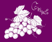 Vector bunch of grapes Royalty Free Stock Photo