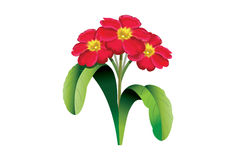 Vector of a bunch of Primroses stock illustration