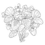 Vector bush with outline Strawberry with berry, flower and leaves in black  on white background. Fruit elements. Royalty Free Stock Photo