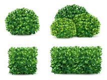 Vector bush set. Vector bush in different forms. An ornamental plant shrub for the design of a park, a garden or a green fence stock illustration