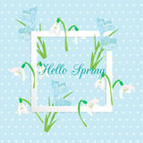 Vector business and personal cards with a spring theme. Blue and white color, primroses, snowdrops and crocuses vector illustration