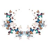 Vector butterflies on a white background. Beautiful, multicolored butterfly, vector image. On a white background Stock Images