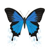 Vector butterflies on a white background. Beautiful, multicolored butterfly, vector image. On a white background Stock Photos