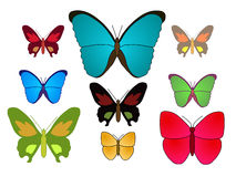 Vector - Butterfly. Vector of a group of butterfly royalty free illustration