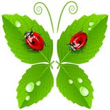 Vector butterfly. With lady bugs isolated on white Stock Photo