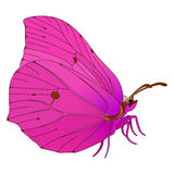 Vector butterfly. Royalty Free Stock Photo