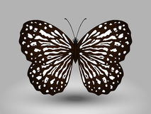Vector Butterfly Royalty Free Stock Photography