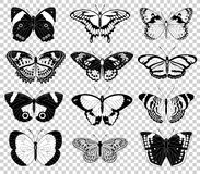 Vector butterfly illustrations Royalty Free Stock Photography