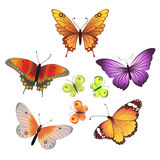 Vector butterfly set Royalty Free Stock Images