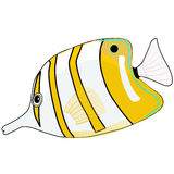 Vector Butterfly white yellow Fish Stock Images