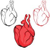 Vector button or icon of a human heart set Royalty Free Stock Photography