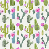 Vector Cactus Background. Seamless Pattern. Exotic Plant Stock Photos