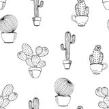 Vector cactus flower background. Seamless pattern with cactus Stock Image
