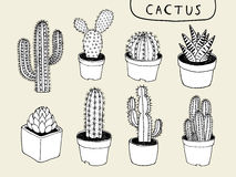 Vector Cactus Hand Drawn. This is vector clip art. Created from my drawing Royalty Free Stock Images
