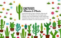 Vector cactus illustration. Vector home cactus illustration. Different types of cactus plants in flowerpots with flowers and grass icons Stock Images