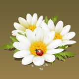 Vector Camomile. And red ladybug Royalty Free Stock Photos