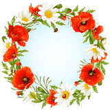 Vector camomile and poppy frame. In the shape of circle Stock Photos