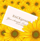 Vector card against the backdrop of sunflowers. Vector greeting card against the backdrop of sunflowers Royalty Free Stock Photo