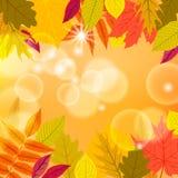 Vector card with autumn decor Stock Photo