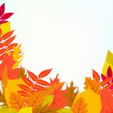 Vector card with autumn decor and leafs Royalty Free Stock Photography