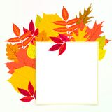 Vector card with autumn decor and leafs Royalty Free Stock Photo