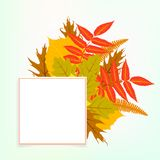 Vector card with autumn decor Stock Photography