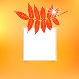 Vector card with autumn decor Royalty Free Stock Image