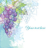 Vector card with bunch of grape and grape leaves in pastel  Royalty Free Stock Images