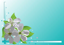 Vector card with cherry flowers  Stock Photos