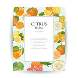 Vector card with citrus fruits and place for your text Royalty Free Stock Image