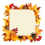 Vector card with colorful autumn leaves. Royalty Free Stock Images