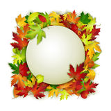 Vector card with colorful autumn leaves and white banner Royalty Free Stock Image