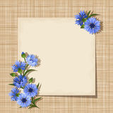 Vector card with cornflowers on a sacking background. Eps-10. Royalty Free Stock Image