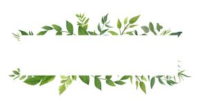 Vector card Design with green fern leaves elegant greenery eucal Royalty Free Stock Photo