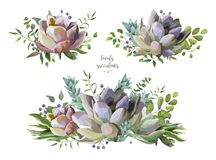 Vector card design with Succulent flower plant, berry herb leaf Royalty Free Stock Photo