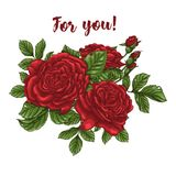 Vector card with garden white and red roses and tulip flowers on white background. Romantic design for natural cosmetics Royalty Free Stock Image