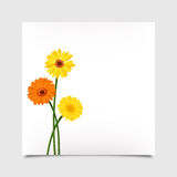 Vector card with gerbera flowers. Eps-10. Royalty Free Stock Photo