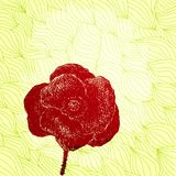Vector card with hand drawn poppy on patterned Stock Images