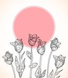Vector card with hand drawn tulips on pink circle. Royalty Free Stock Photo