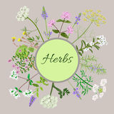 Vector card with herbal flowers. Vector card with herbs and plants. Vintage circle with herbal flowers illustration Royalty Free Stock Photo
