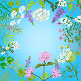 Vector card with herbal flowers. Salvia, angelica, oregano, rosemary, savory, verbena anise fennel coltsfoot marjoram flowers Vector illustration Stock Photography
