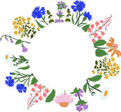 Vector card with herbs in a circle - Hypericum, Angustifolium, chamomile, Campanula, cornflowers, Echinacea Royalty Free Stock Photography