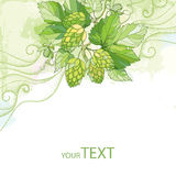 Vector card with Hops or Humulus with ornate leaves and cones on the pastel background with dotted curls. Stock Images