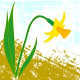 Vector card with one daffodil Royalty Free Stock Photography
