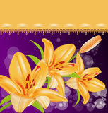 Vector card: orange lilies Stock Image