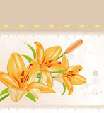 Vector card: orange lilies Royalty Free Stock Photos