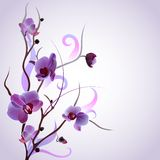 Vector card with orchid branch Royalty Free Stock Photo
