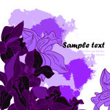 Vector card with orchids Stock Photography